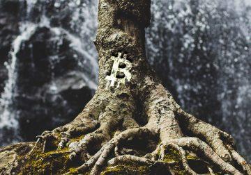 Taproot la nueva actualización de Bitcoin