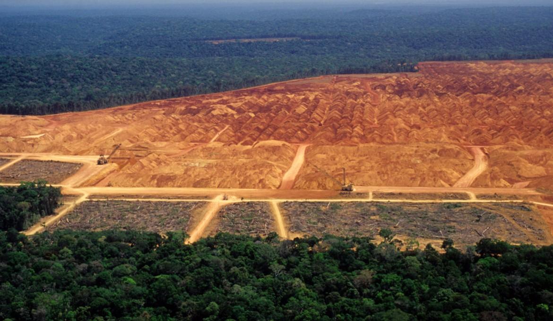 JBS, el mayor procesador de carnes del mundo, quiere mitigar el impacto de la industria en la deforestación del Amazonas utilizando tecnología blockchain