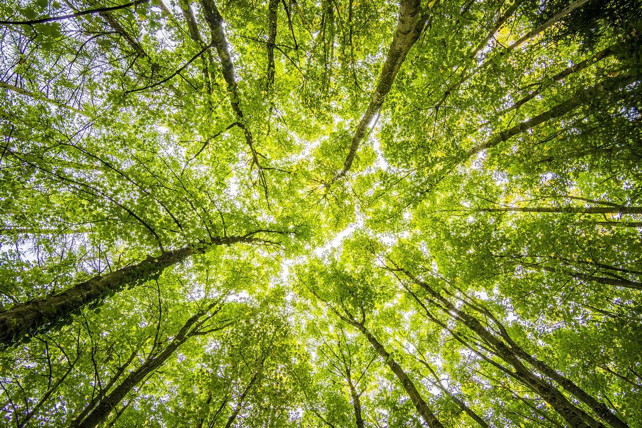 En Canadá, lanzan un fondo cotizado en bolsa de Bitcoin libre de emisiones que impulsará la plantación de árboles como método de descarbonización